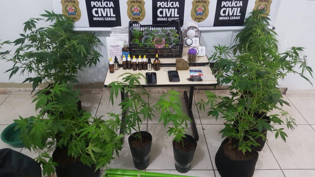 Dupla é presa em flagrante por cultivar maconha em sítio de Lavras - Foto: Divulgação/PCMG