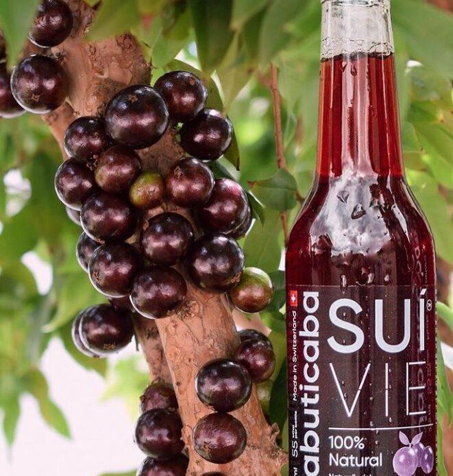 Jabuticaba é protagonista de nova bebida saudável lançada exclusivamente em BH e SP - Foto: Divulgação