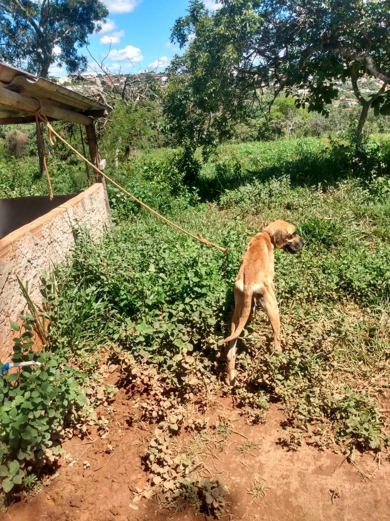 Polícia prende homem que deixou cão amarrado para morrer em Mateus Leme - Foto: Divulgação/PCMG