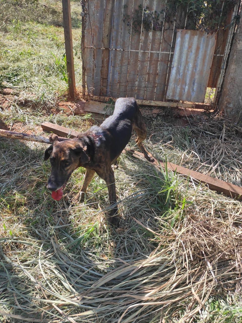 Polícia resgata sete cães em situação de maus-tratos em Pará de Minas - Foto: Divulgação/PCMG