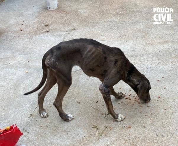 Polícia Civil prende suspeito de maltratar cadela em Passos - Foto: Divulgação/PCMG