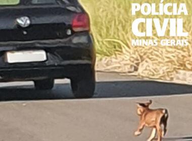 Polícia Civil investiga suspeitos de abandonar cão em Alfenas - Foto: Divulgação/PCMG