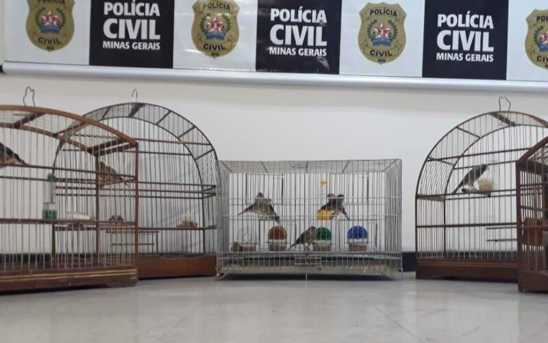 Homem é preso por crimes ambientais em Belo Horizonte - Foto: Divulgação/PCMG