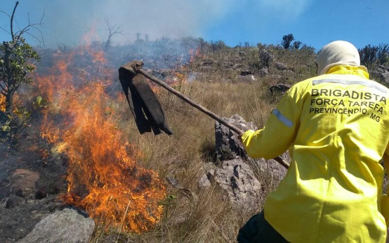 IEF abre processo seletivo para contratação de brigadistas - Foto: MNEI/Divulgação