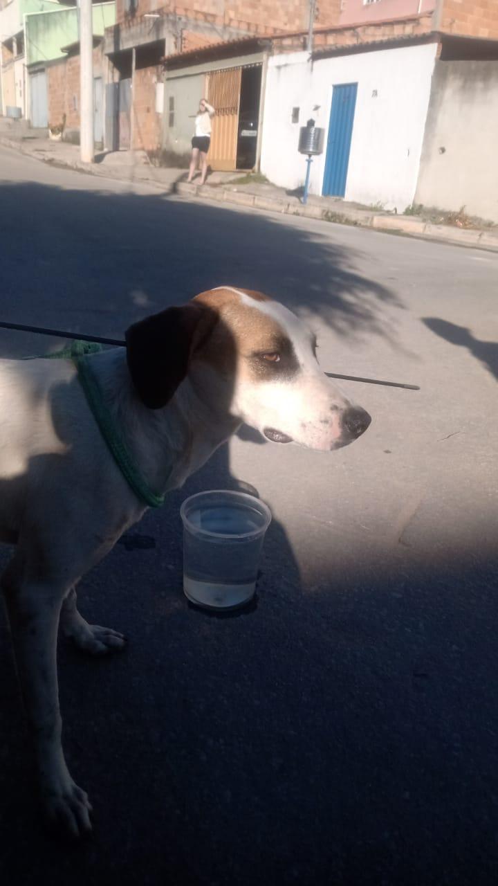 Cachorro tem pescoço atingido por flecha em Ibirité, na Grande BH - Foto: Divulgação/Corpo de Bombeiros