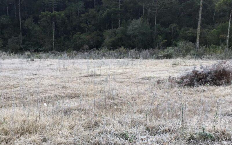 Monte Verde bate recorde de frio do ano com -2,7ºC - Foto: Rebecca Wagner