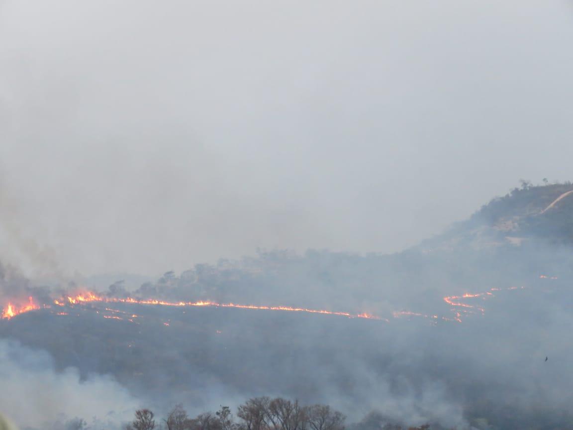 Incêndio atinge área de reflorestamento no bairro Ribeiro de Abreu, em BH - Foto: Elberty Valadares/Por Dentro de Minas